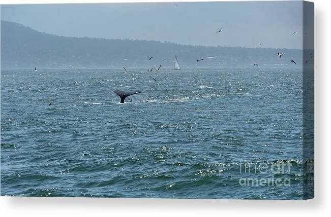 Big Canvas Print featuring the photograph A Whale's Tail Above Water With Sail Boat In The Background by PorqueNo Studios