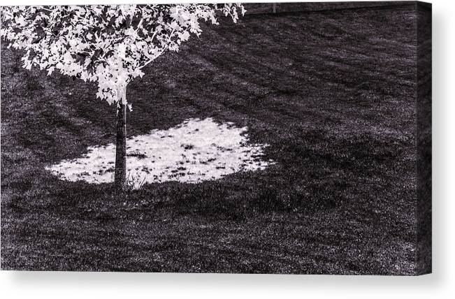 Tree Canvas Print featuring the photograph Shade Of Tree 4th by Hyuntae Kim