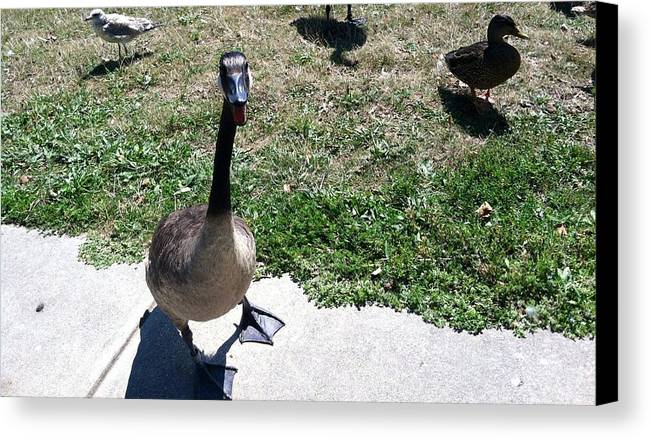 Wildlife Canvas Print featuring the digital art Goose by Anthony Padilla