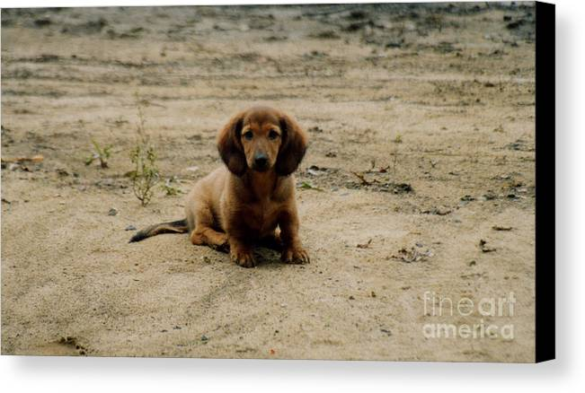 Puppy Canvas Print featuring the photograph Puppy On The Beach by Nancie Johnson