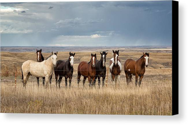 Rt 1806 Canvas Print featuring the photograph Seven Horses On The Range by Abby Krim