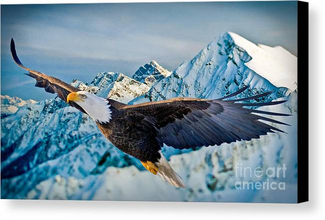 Eagle Canvas Print featuring the photograph Soaring Bald Eagle by Gary Keesler