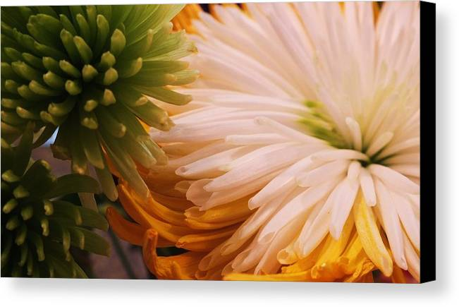 Spring Canvas Print featuring the photograph Spring Has Sprung II by Anna Villarreal Garbis