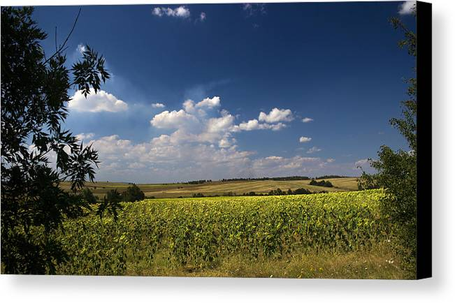 Sky Canvas Print featuring the photograph Sunflowers With Cloudy Blue Sky by Radoslav Nedelchev
