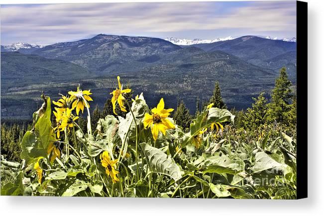Montana Landscapes Photographs Canvas Print featuring the photograph Nature Dance by Janie Johnson