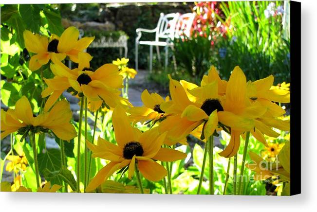 Black Eye Susan Flowers Canvas Print featuring the photograph Spring Bench by Laura Holt