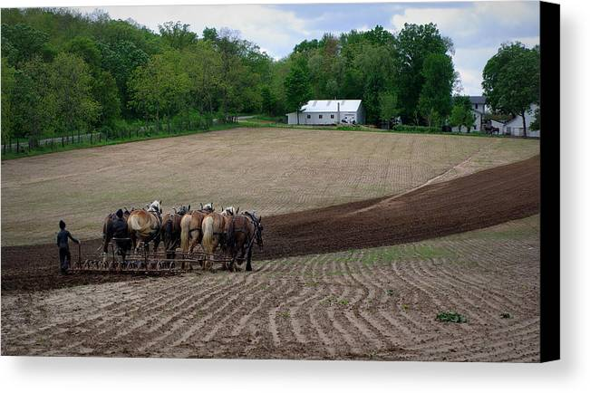 Amish Canvas Print featuring the photograph Teamwork by Linda Mishler