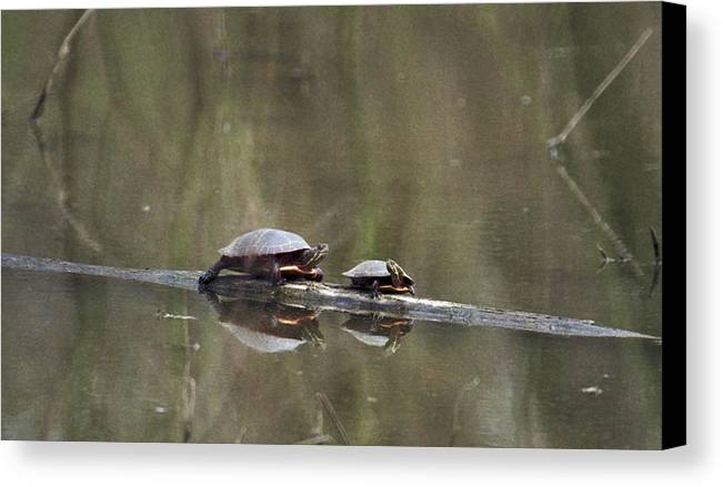 Turtle Canvas Print featuring the photograph 070406-68 by Mike Davis