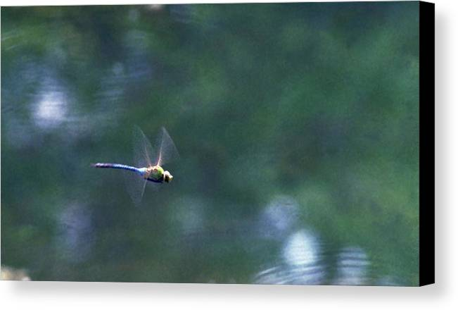 Dragonfly Canvas Print featuring the photograph 070406-80 by Mike Davis
