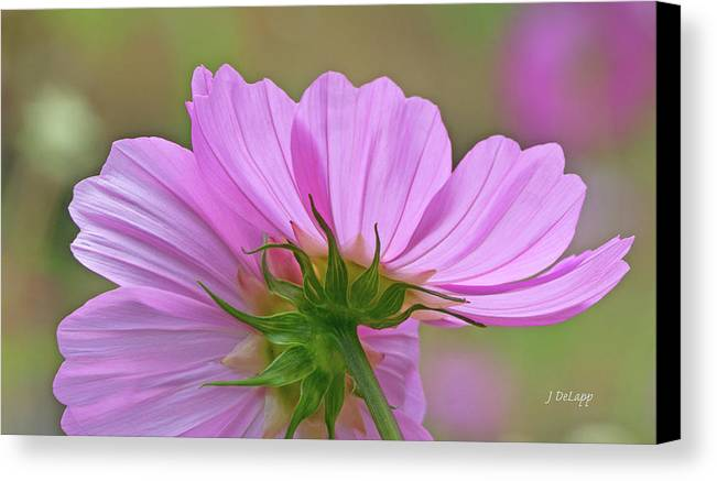 Cosmos Canvas Print featuring the photograph Cosmos Light by Janet DeLapp