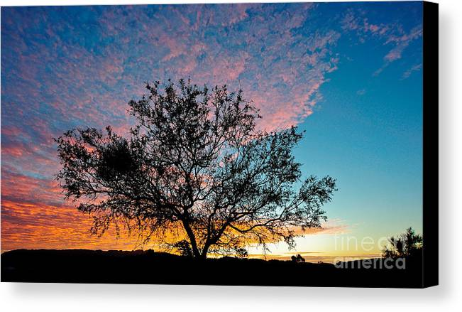 Tree Canvas Print featuring the photograph Outback Sunset Pano by Ray Warren