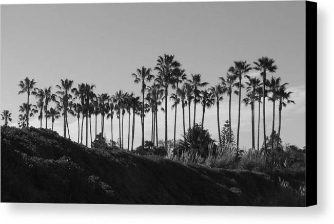 Landscapes Canvas Print featuring the photograph Palms by Shari Chavira