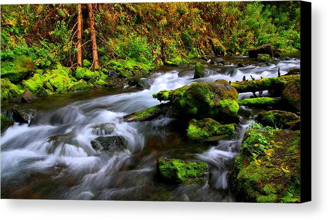 Colorado Canvas Print featuring the photograph Through The Forest Floor It Flows by Bill Keiran