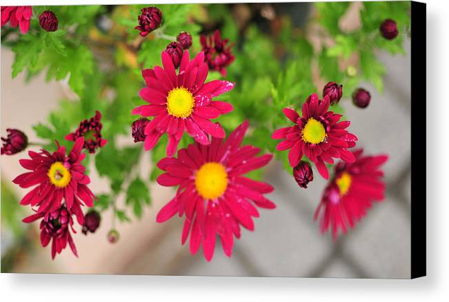 Flower Red Yellow Flowers Aperature Canvas Print featuring the photograph Untitled by Brian Foxx