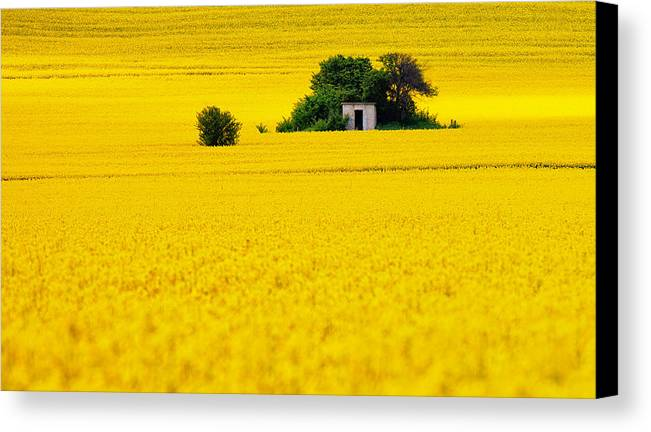 Field Canvas Print featuring the photograph Yellow by Evgeni Dinev