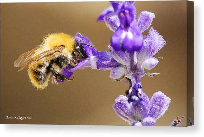 Macro Photography Canvas Print featuring the photograph Humming Bee by Stwayne Keubrick