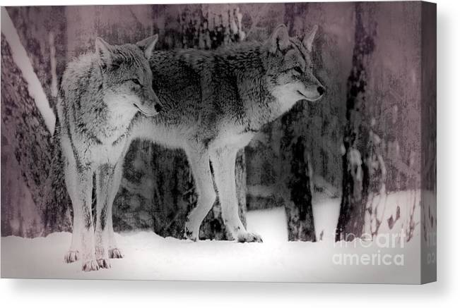 Coyote Canvas Print featuring the photograph Tranquility by Bianca Nadeau