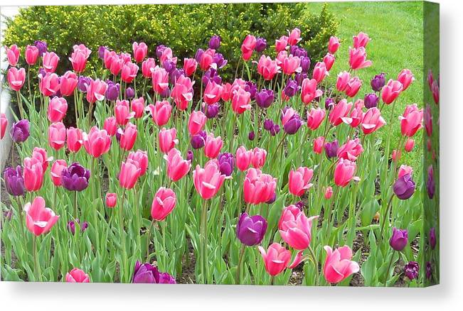 Flowers Canvas Print featuring the photograph Tulips by Coleen Harty