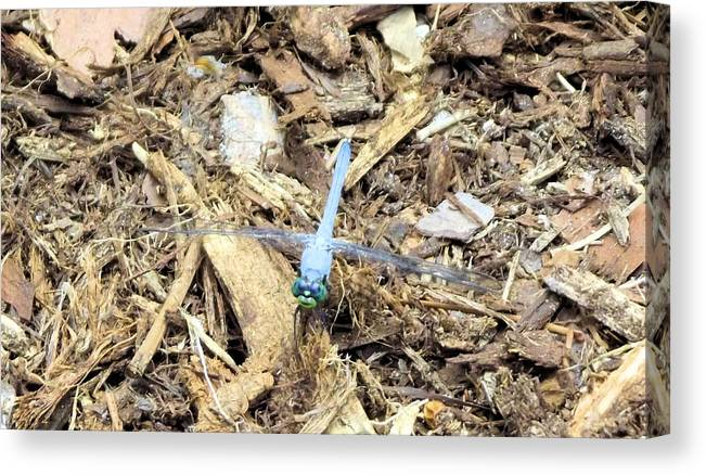 Blue Canvas Print featuring the photograph Blue Dragonfly by Jennifer Stockman