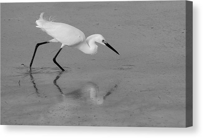 Egret Canvas Print featuring the photograph Egret In Black And White  Two by Monica Lewis