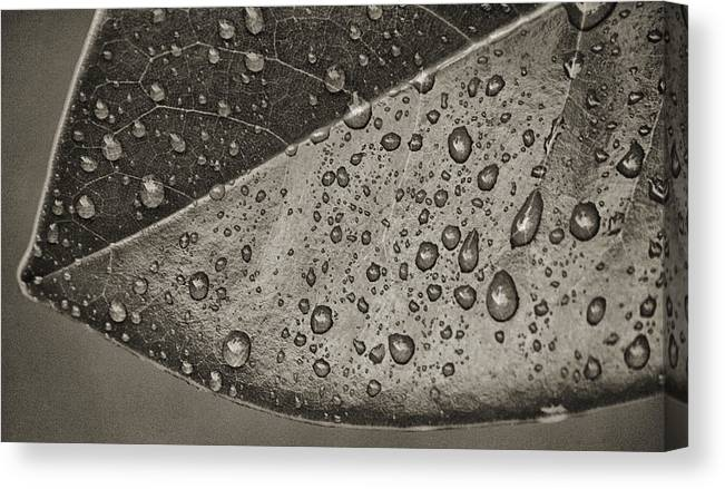 Macro Canvas Print featuring the photograph Nature's Tears by Brenda Bryant