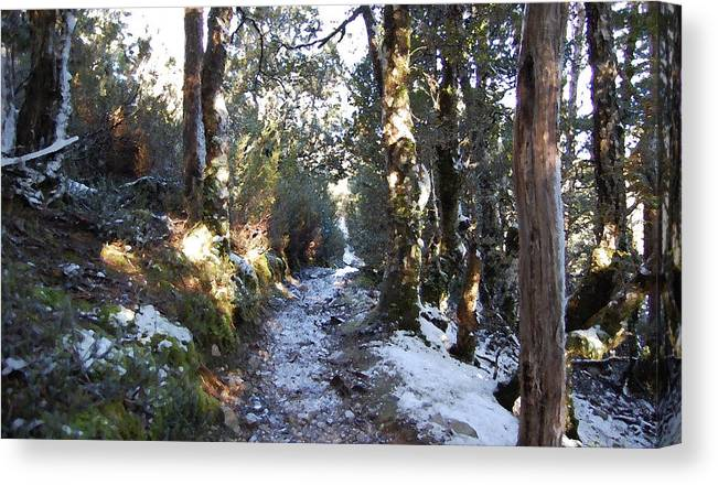 Landscape Canvas Print featuring the painting King Billy Forest Cradle Mountain by Sarah King