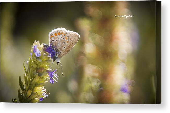 Macro Photography Canvas Print featuring the photograph Butterfly On The Spot by Stwayne Keubrick