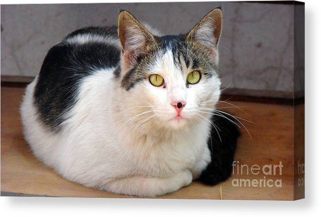 Cat Eyes Canvas Print featuring the photograph Yellow Eyes by Shariq Khan