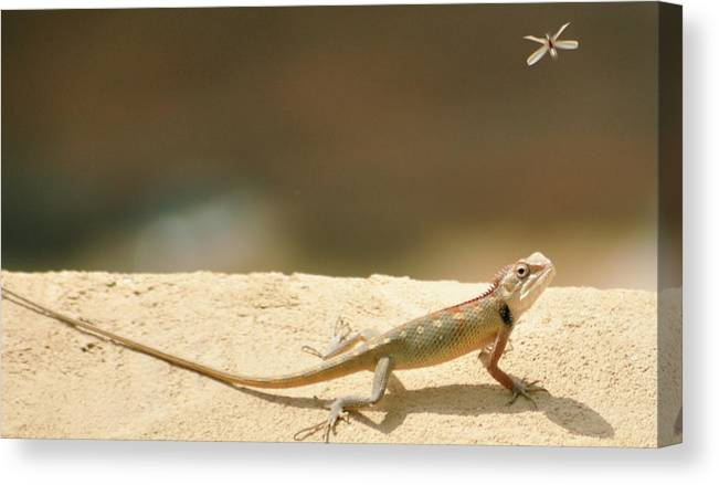 Alertness Canvas Print featuring the photograph Lizards by Shahzeb Nasir