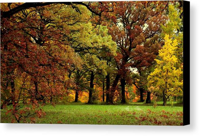 Autumn Canvas Print featuring the photograph Searching For Maple Magic by Rosanne Jordan