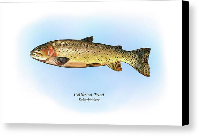 Cutthroat Trout Canvas Print featuring the painting Cutthroat Trout by Ralph Martens