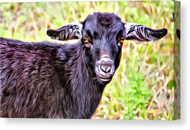 Baby Goat Canvas Print featuring the photograph Baby Billy by Alice Gipson