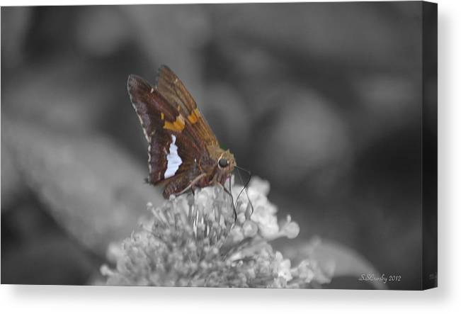 Skipper Butterfly Canvas Print featuring the photograph Skipper And Clover by Susan Stevens Crosby