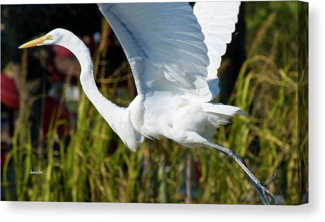 Wildlife Canvas Print featuring the photograph Flight by Betsy Knapp