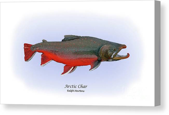 Arctic Char Canvas Print featuring the painting Arctic Charr by Ralph Martens
