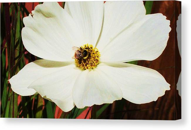 Flowers Canvas Print featuring the photograph In A Bee's Life by Russell Barton