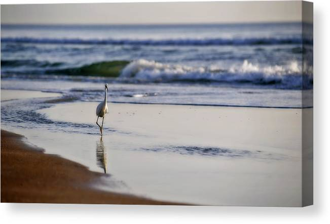 Bird Canvas Print featuring the photograph Morning Walk At Ormond Beach by Steven Sparks