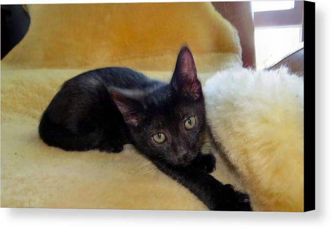 Cat Canvas Print featuring the photograph Hamming It Up by Art Dingo
