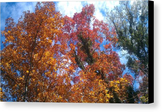 Fall Canvas Print featuring the photograph Autumn Color by Kenny Glover