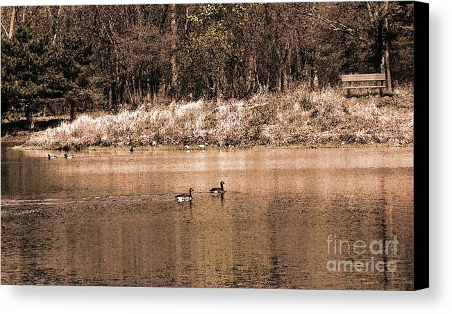 Landscape Canvas Print featuring the photograph Bench By The Lake by Cedric Hampton