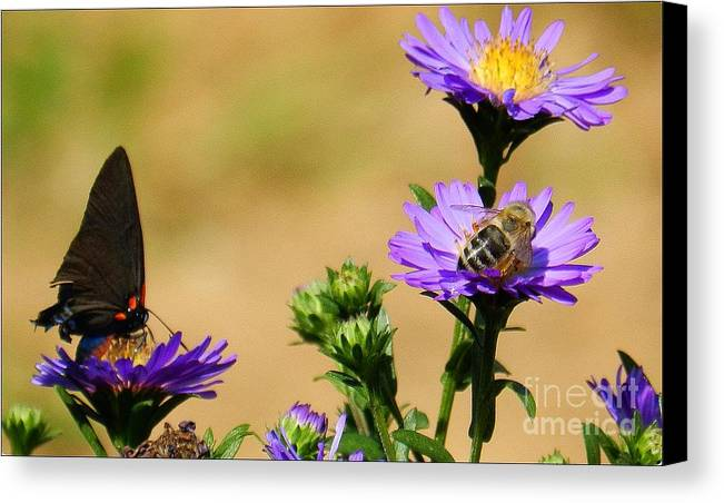 Floral Canvas Print featuring the photograph Daisy Friends by Julia Hassett
