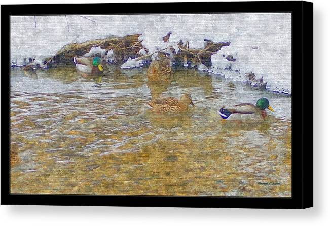 January Thaw At Riverside I Park Wild Life Ducks Mallard Teal Male Mallard Female Mallard Melting Snow Riverside Sights Grand River Nature Winter Sights Creek Current City Park Riverside Park Grand Rapids Michigan Color Painting Wildlife In The City Stony Shoreline Stony Riverside Shore Waterway Pure Michigan Winter Wonderland River Waterfowl Sanctuary Ecosystem Rosemarie E Seppala Artist Canvas Print featuring the painting January Thaw At Riverside I by Rosemarie E Seppala