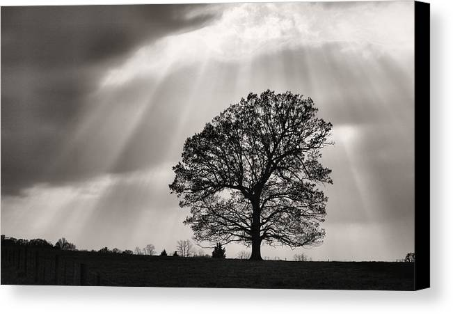 Shining Down Canvas Print featuring the photograph Shining Down by JC Findley