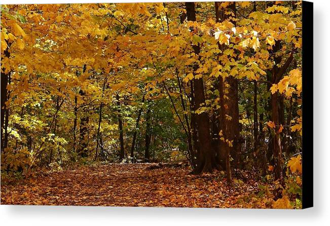 Woodland Canvas Print featuring the photograph Woodland Path by Bruce Bley