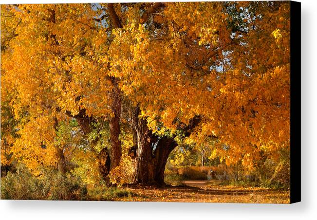 Fall Canvas Print featuring the photograph Mid-autumn Afternoon by Tim Reaves