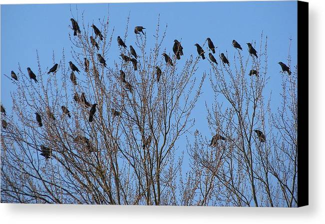 Bird Canvas Print featuring the photograph Birds In The Trees by Kathy Roncarati