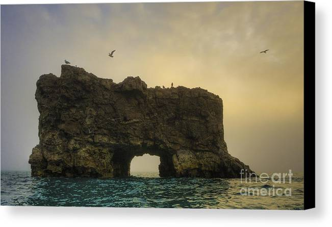 Glaucous Gull Canvas Print featuring the photograph O Mighty Rock... by Nina Stavlund