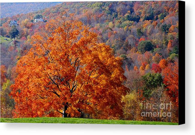 Litchfield County Canvas Print featuring the photograph Orange Tree by Andrea Simon