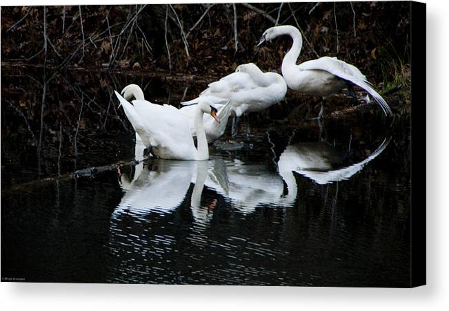 Birds Canvas Print featuring the photograph Swans And Snow Geese by Ches Black