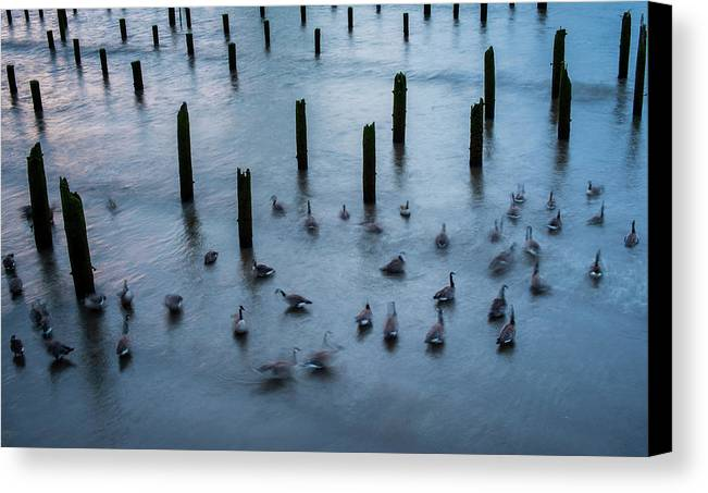 Astoria Canvas Print featuring the photograph Twilight Geese by Robert Potts